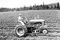 Tractor on Strawberry Farm